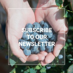 Berriesza Web2021 Footer Newsletter